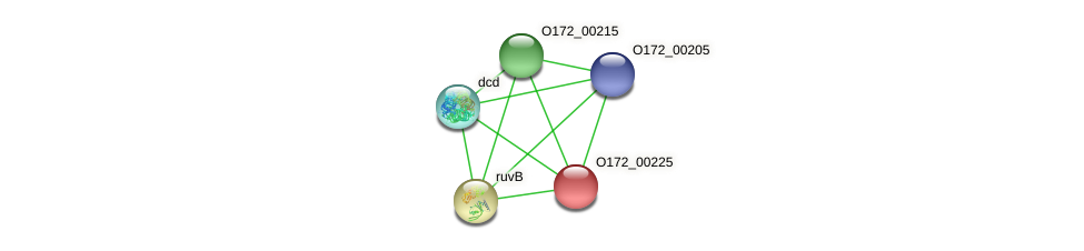 O172_00225 protein (Chlamydia trachomatis) - STRING interaction network