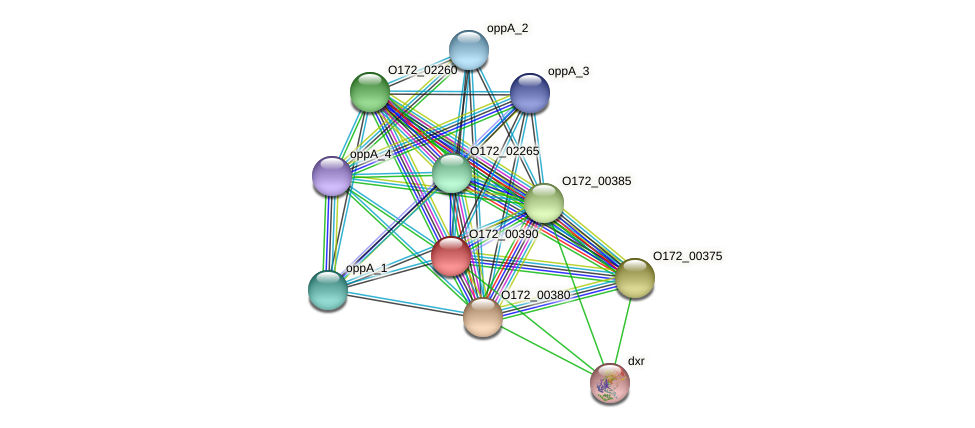 O172_00390 protein (Chlamydia trachomatis) - STRING interaction network