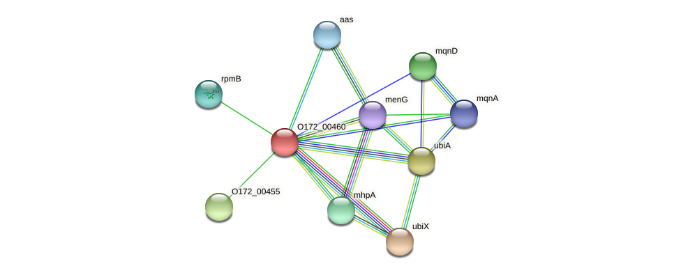 O172_00460 protein (Chlamydia trachomatis) - STRING interaction network