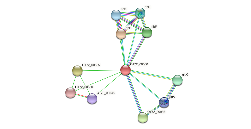 O172_00560 protein (Chlamydia trachomatis) - STRING interaction network
