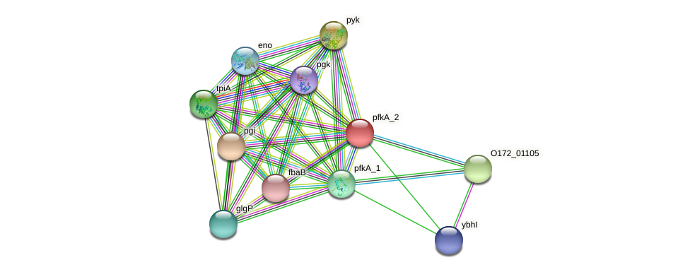 pfk protein (Chlamydia trachomatis) - STRING interaction network