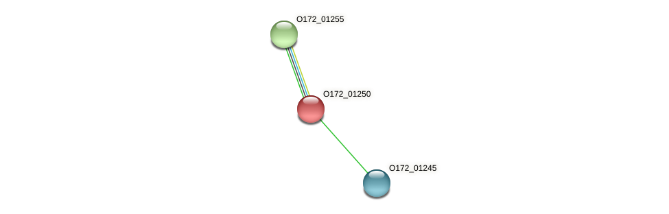 O172_01250 protein (Chlamydia trachomatis) - STRING interaction network