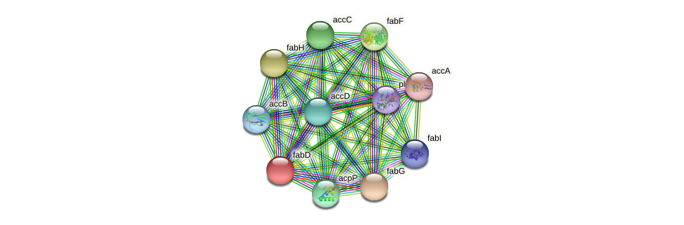 fabD protein (Chlamydia trachomatis) - STRING interaction network