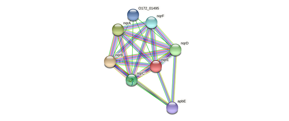 nqrE protein (Chlamydia trachomatis) - STRING interaction network