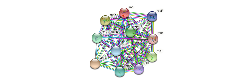rnc protein (Chlamydia trachomatis) - STRING interaction network