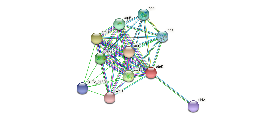 ntpK protein (Chlamydia trachomatis) - STRING interaction network