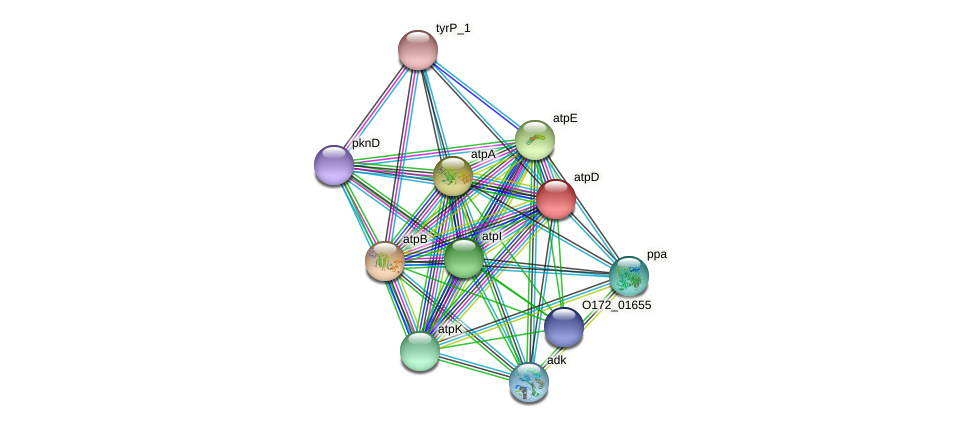atpD protein (Chlamydia trachomatis) - STRING interaction network