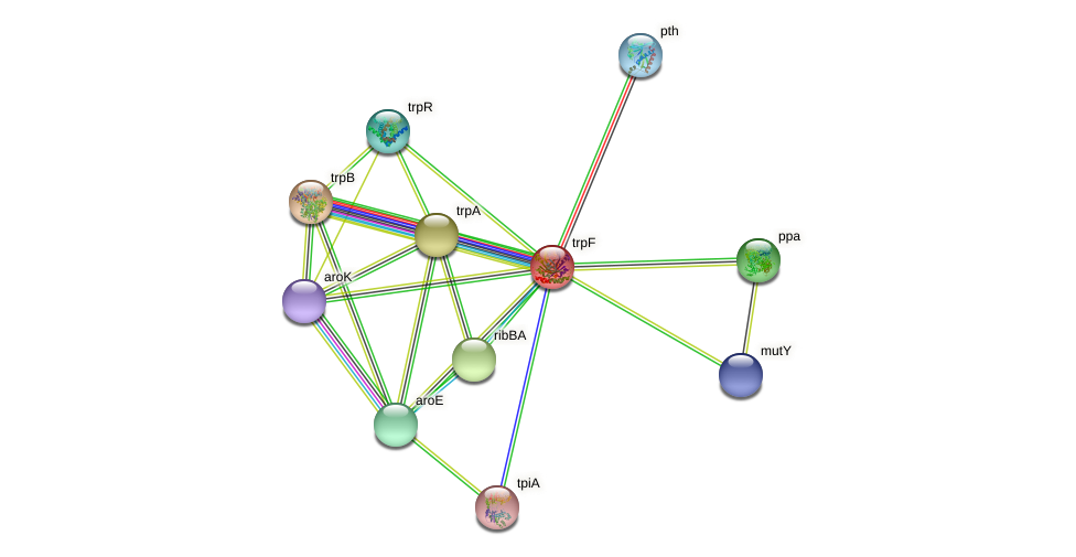 trpC protein (Chlamydia trachomatis) - STRING interaction network