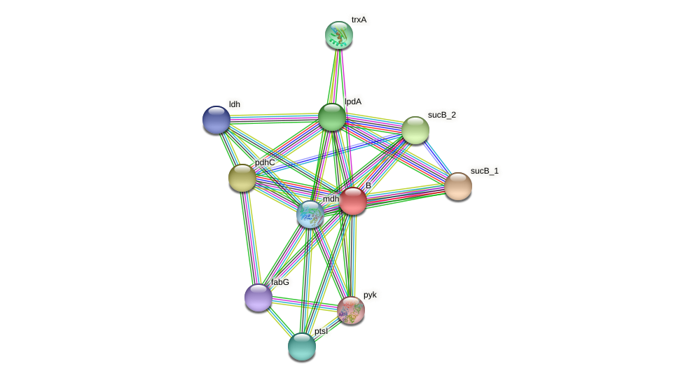 bfmBAB protein (Chlamydia trachomatis) - STRING interaction network