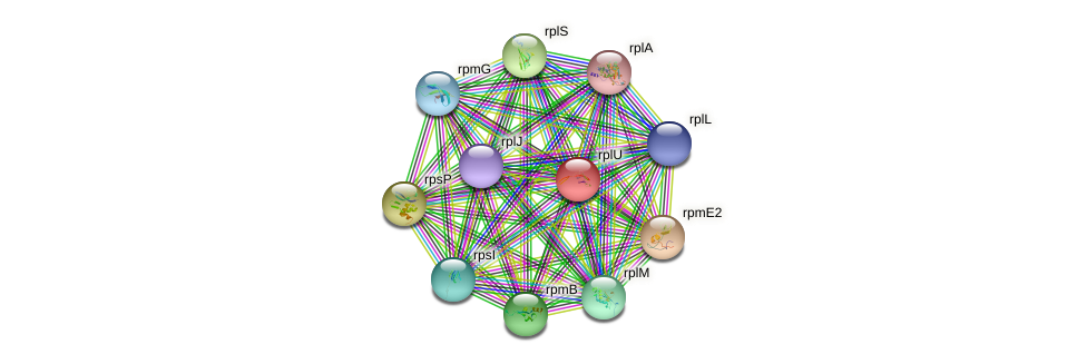 rplU protein (Chlamydia trachomatis) - STRING interaction network