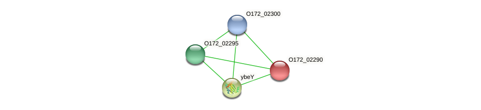 O172_02290 protein (Chlamydia trachomatis) - STRING interaction network