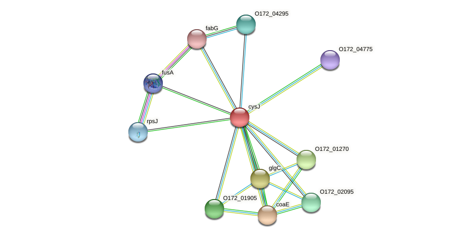 cysJ protein (Chlamydia trachomatis) - STRING interaction network
