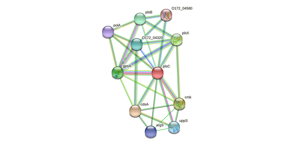 plsC protein (Chlamydia trachomatis) - STRING interaction network