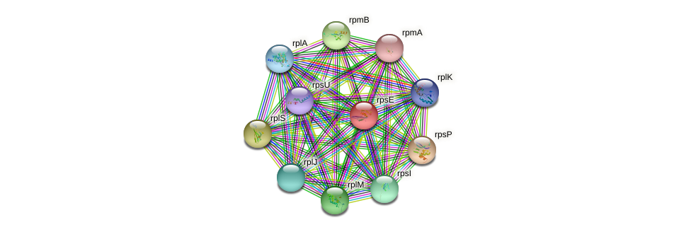 rpsE protein (Chlamydia trachomatis) - STRING interaction network