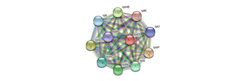 rplD protein (Chlamydia trachomatis) - STRING interaction network