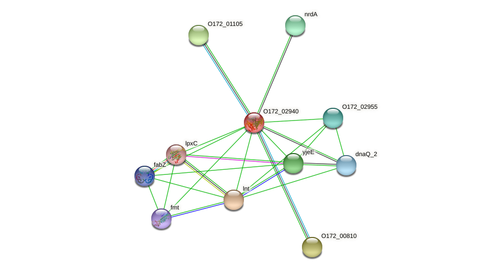 O172_02940 protein (Chlamydia trachomatis) - STRING interaction network