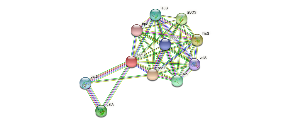 aspS protein (Chlamydia trachomatis) - STRING interaction network