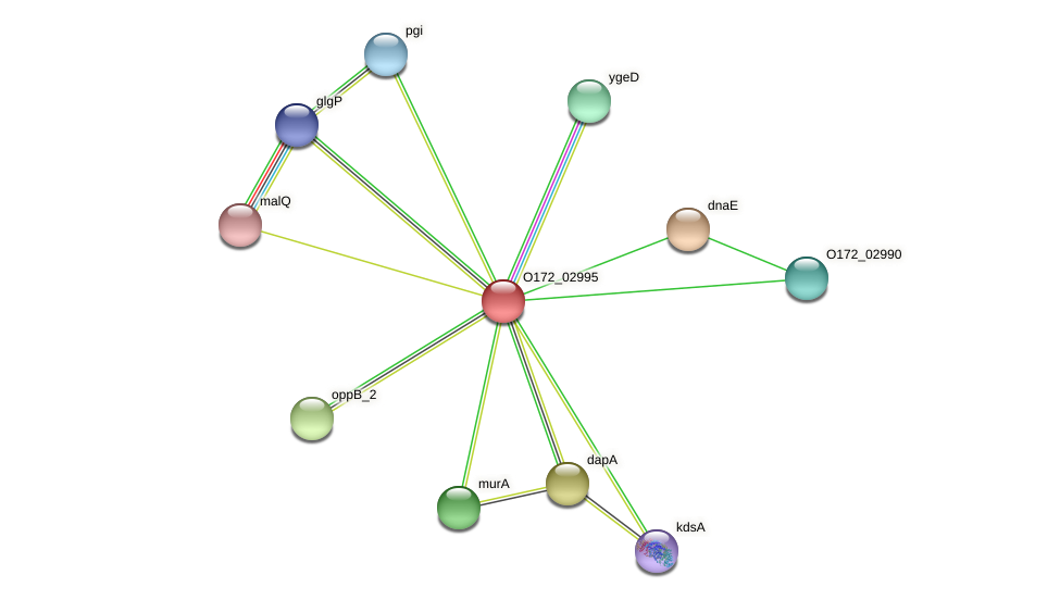 uhpC protein (Chlamydia trachomatis) - STRING interaction network