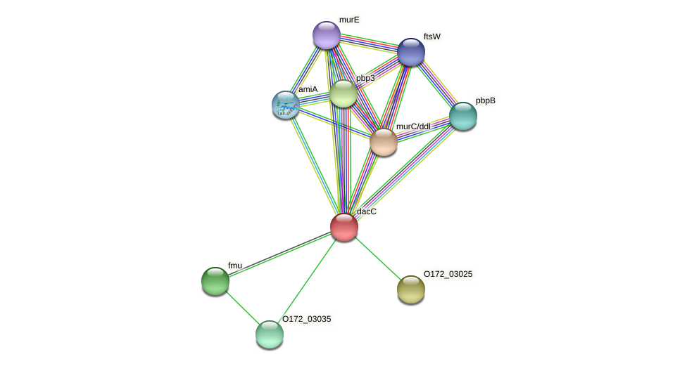 dacC protein (Chlamydia trachomatis) - STRING interaction network