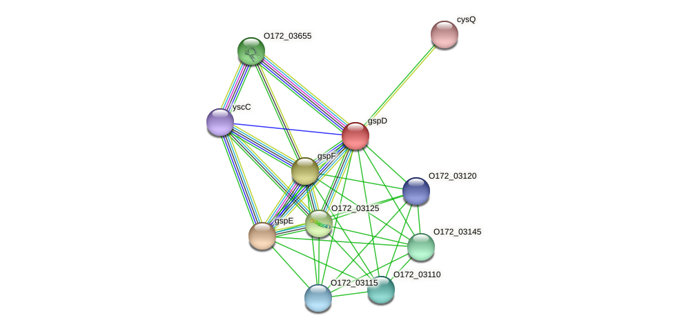 gspD protein (Chlamydia trachomatis) - STRING interaction network