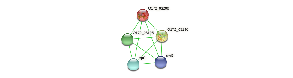 O172_03200 protein (Chlamydia trachomatis) - STRING interaction network