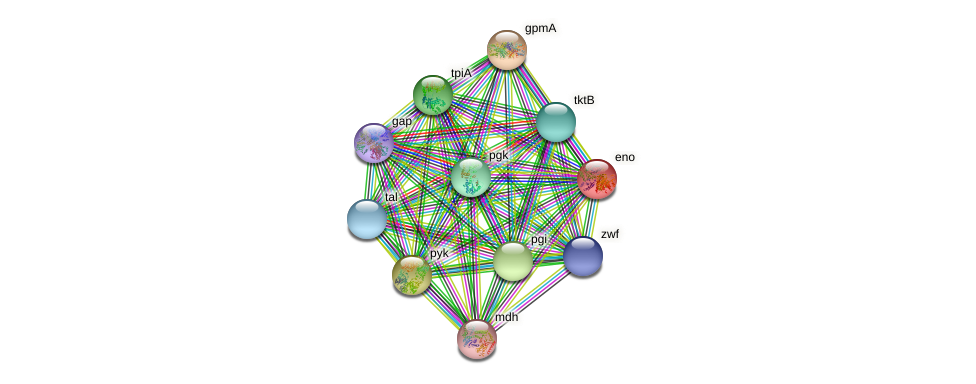 eno protein (Chlamydia trachomatis) - STRING interaction network