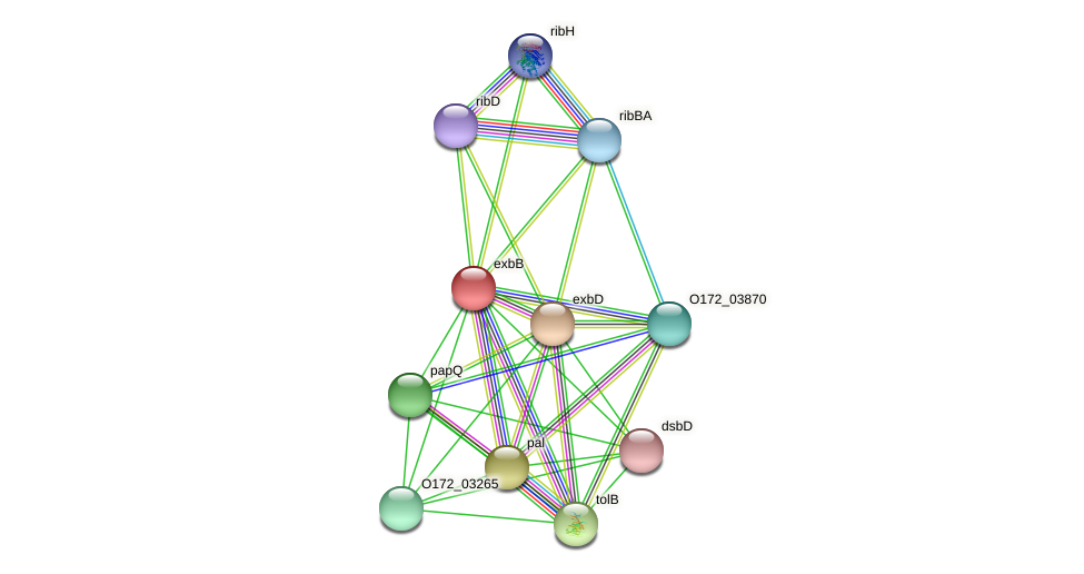 exbB protein (Chlamydia trachomatis) - STRING interaction network