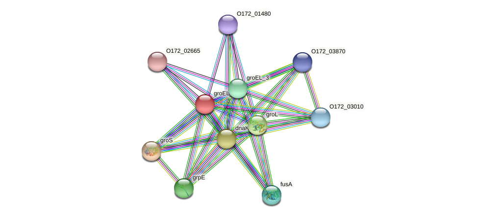 groEL2 protein (Chlamydia trachomatis) - STRING interaction network