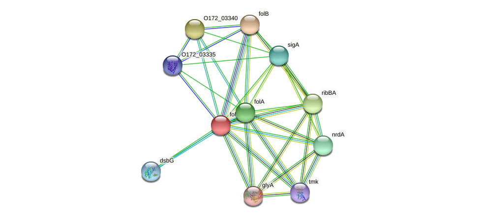 folP protein (Chlamydia trachomatis) - STRING interaction network