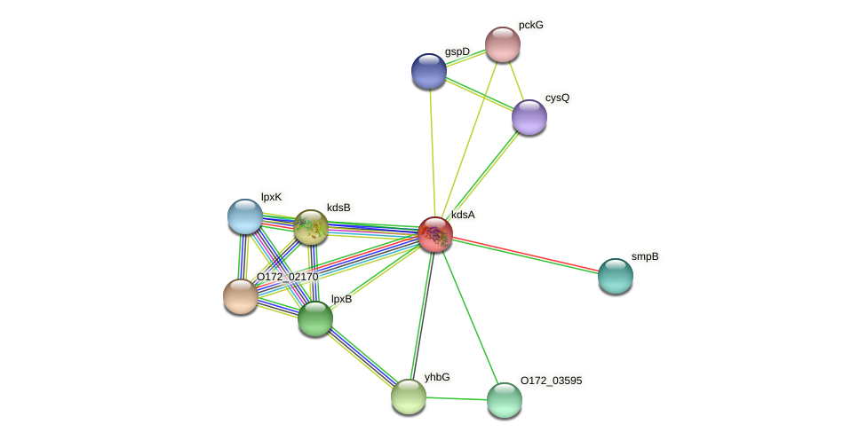 kdsA protein (Chlamydia trachomatis) - STRING interaction network
