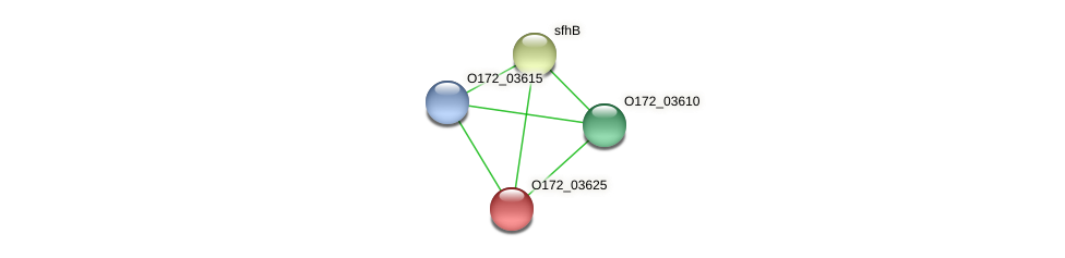 O172_03625 protein (Chlamydia trachomatis) - STRING interaction network