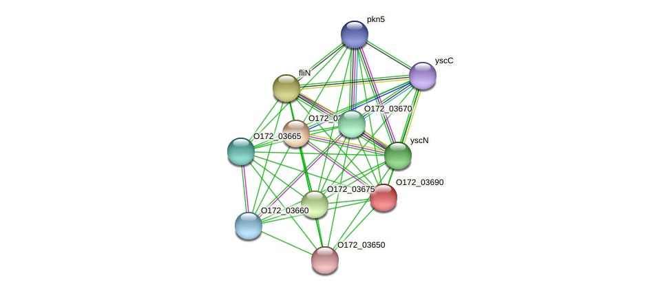 copE protein (Chlamydia trachomatis) - STRING interaction network