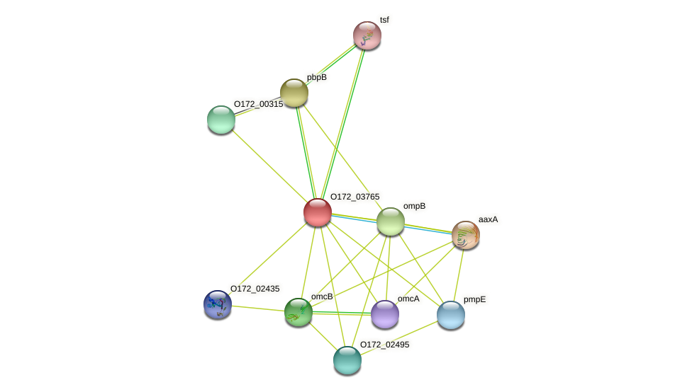 ompA protein (Chlamydia trachomatis) - STRING interaction network