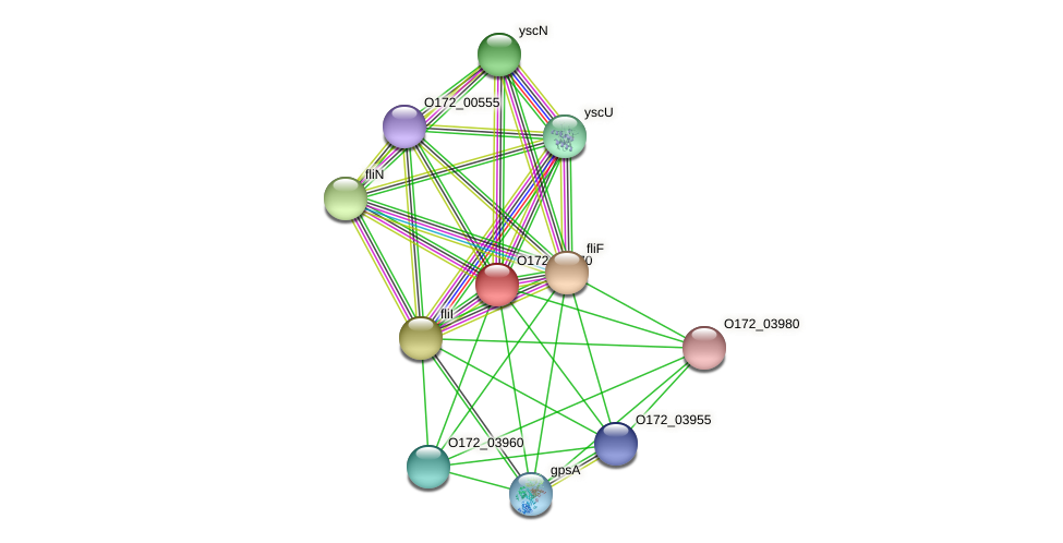 O172_03970 protein (Chlamydia trachomatis) - STRING interaction network