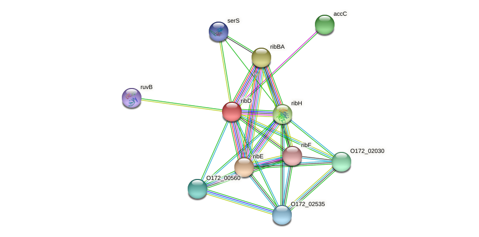 ribD protein (Chlamydia trachomatis) - STRING interaction network