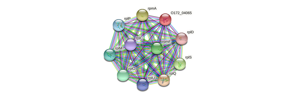 O172_04065 protein (Chlamydia trachomatis) - STRING interaction network