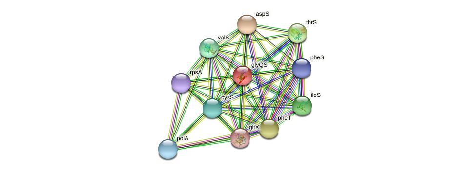glyQ protein (Chlamydia trachomatis) - STRING interaction network