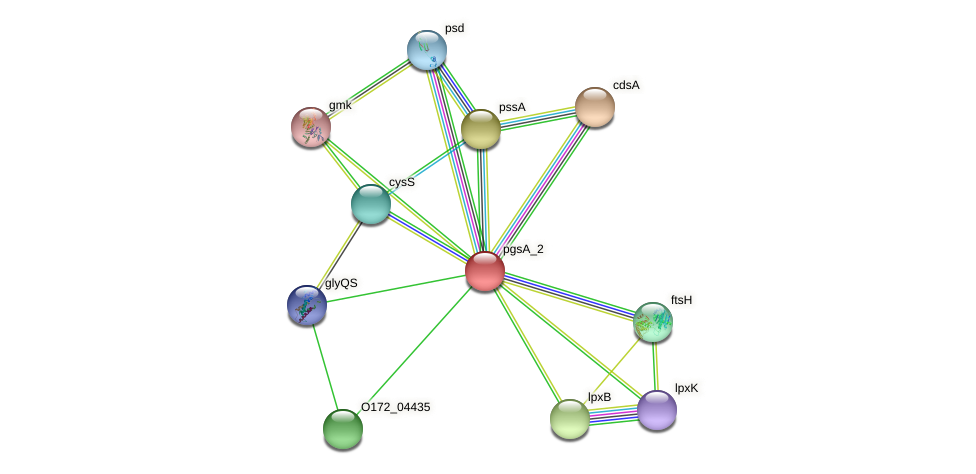 pgsA protein (Chlamydia trachomatis) - STRING interaction network