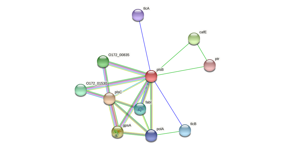 plsB protein (Chlamydia trachomatis) - STRING interaction network