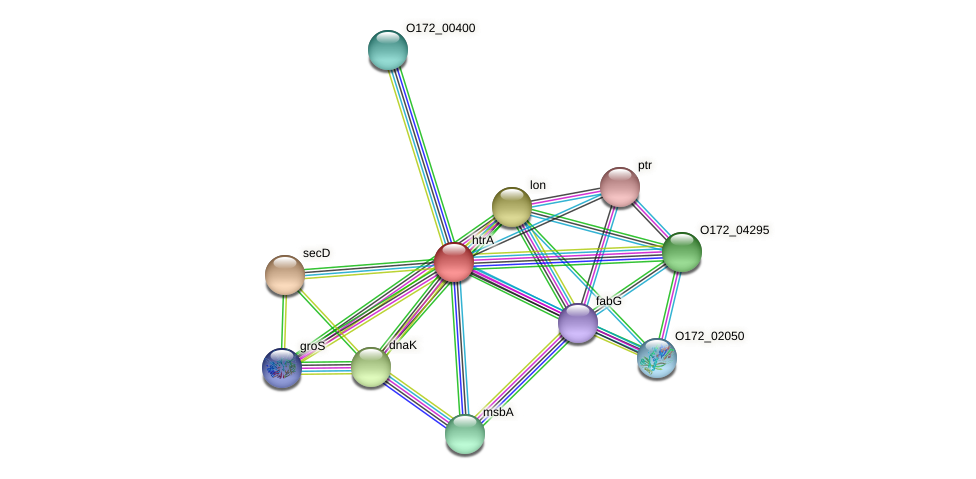 htrA protein (Chlamydia trachomatis) - STRING interaction network