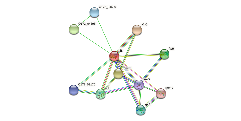 tilS protein (Chlamydia trachomatis) - STRING interaction network