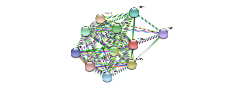 fumC_1 protein (Chlamydia trachomatis) - STRING interaction network
