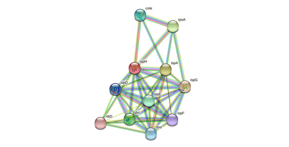 ispH protein (Chlamydia trachomatis) - STRING interaction network