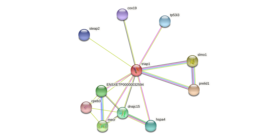 triap1 protein (Xenopus Silurana) - STRING interaction network