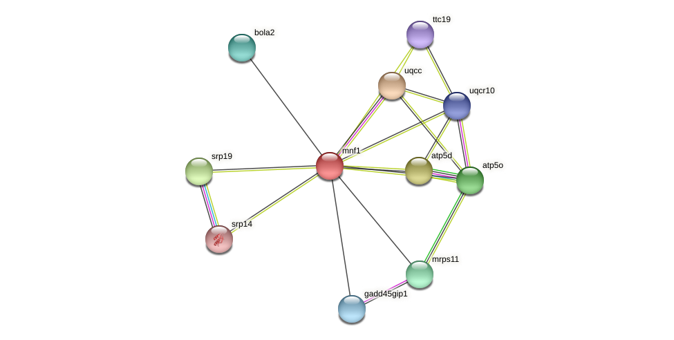 mnf1 protein (Xenopus tropicalis) - STRING interaction network