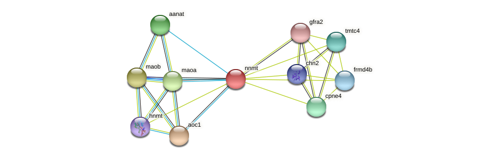 ENSXETG00000028049 protein (Xenopus tropicalis) - STRING interaction network