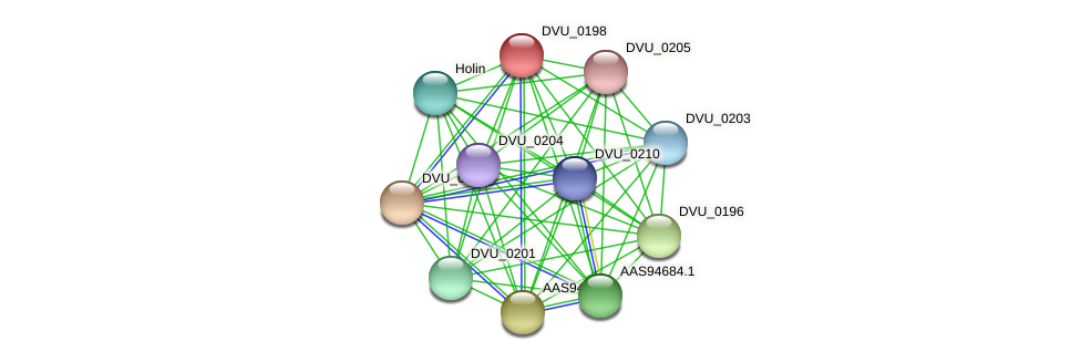 DVU_0198 protein (Desulfovibrio vulgaris Hildenborough) - STRING interaction network