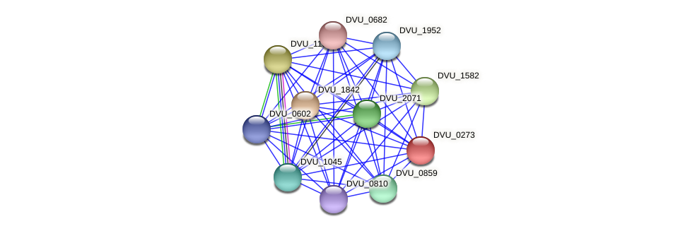 DVU_0273 protein (Desulfovibrio vulgaris Hildenborough) - STRING interaction network