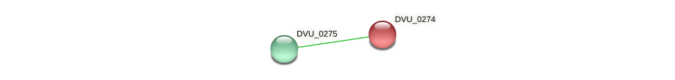 DVU_0274 protein (Desulfovibrio vulgaris Hildenborough) - STRING interaction network
