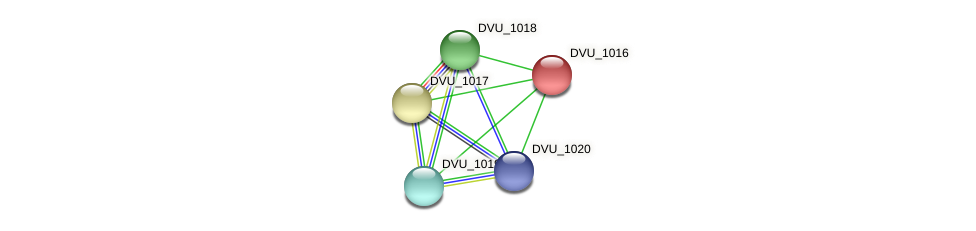 DVU_1016 protein (Desulfovibrio vulgaris Hildenborough) - STRING interaction network